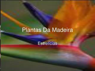 Plantas Da Madeira