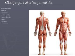 Oboljenja i oštećenja mišića