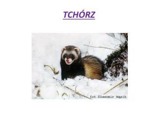 TCH�RZ