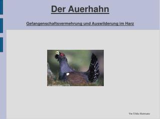 Der Auerhahn Gefangenschaftsvermehrung und Auswilderung im Harz