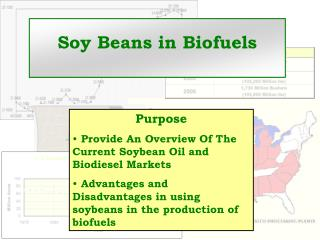 Soy Beans in Biofuels