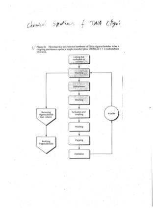 Ligaton-Independent PCR Cloning