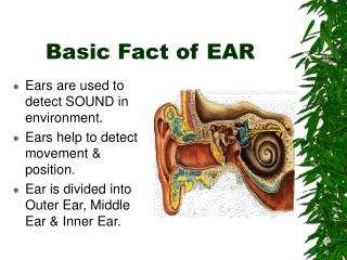 Basic Fact of EAR