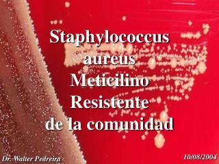 Staphylococcus aureus  Meticilino Resistente  de la comunidad