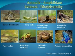 Animals –  Amphibians Zvieratá  -  Obojživelníky