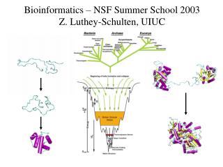 Bioinformatics – NSF Summer School 2003 Z. Luthey-Schulten, UIUC