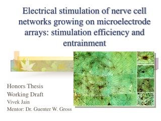 Honors Thesis Working Draft Vivek Jain Mentor: Dr. Guenter W. Gross