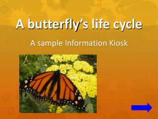 A butterfly ' s life cycle