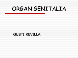 ORGAN GENITALIA