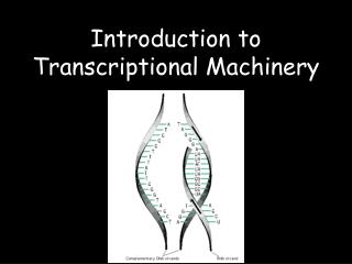 Introduction to Transcriptional Machinery