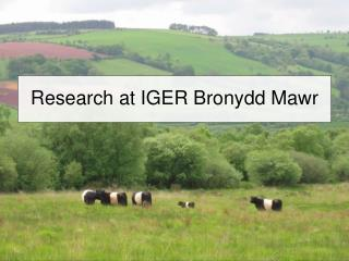Research at IGER Bronydd Mawr