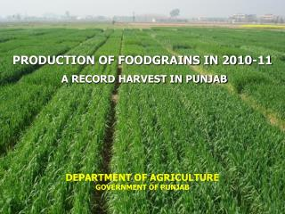 PRODUCTION OF FOODGRAINS IN 2010-11 A RECORD HARVEST IN PUNJAB