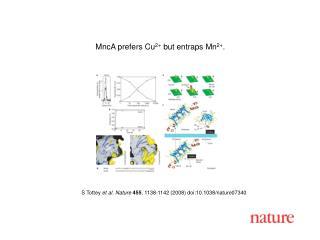 S Tottey et al. Nature 455 , 1138-1142 (2008) doi:10.1038/nature07340