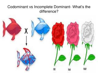 Codominant vs Incomplete Dominant- What's the difference?