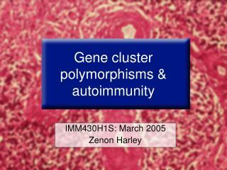Gene cluster polymorphisms & autoimmunity
