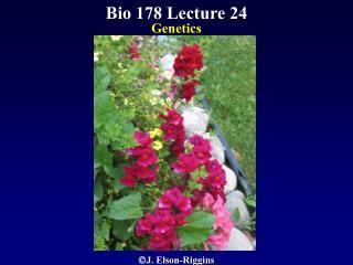 Bio 178 Lecture 24