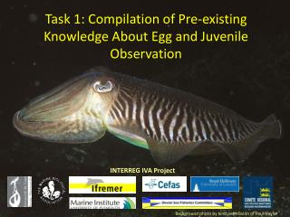 Task 1: Compilation of Pre-existing Knowledge About Egg and Juvenile Observation