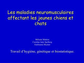 Les maladies neuromusculaires affectant les jeunes chiens et chats