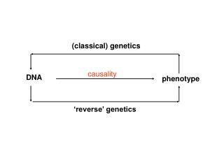(classical) genetics