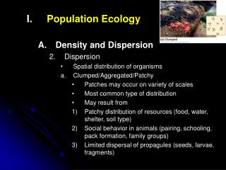 Population Ecology Density and Dispersion Dispersion Spatial distribution of organisms