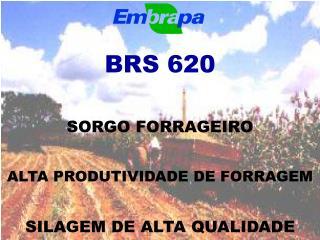 BRS 620 SORGO FORRAGEIRO ALTA PRODUTIVIDADE DE FORRAGEM SILAGEM DE ALTA QUALIDADE