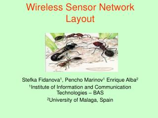 Wireless Sensor Network Layout