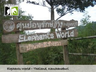 Elephants  World � Thailand, Kanchanaburi