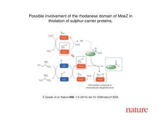 E Sasaki et al. Nature  000 , 1-5 (2014)  doi:10.1038/nature13256
