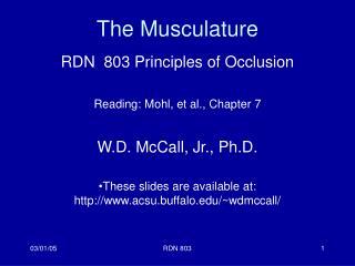 The Musculature