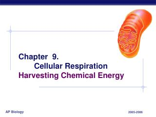 Chapter  9.  Cellular Respiration Harvesting Chemical Energy