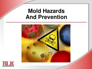 Mold Hazards And Prevention