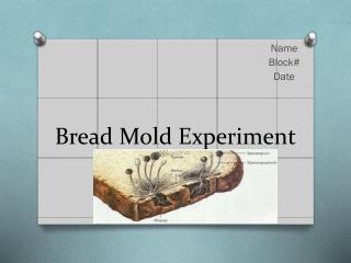 Bread Mold Experiment