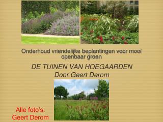 Onderhoud vriendelijke beplantingen voor mooi openbaar groen
