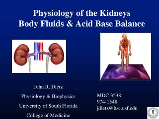 Physiology of the Kidneys Body Fluids & Acid Base Balance