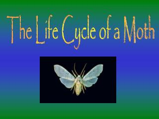The Life Cycle of a Moth