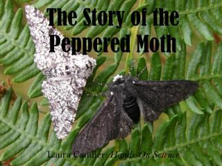 The Story of the Peppered Moth
