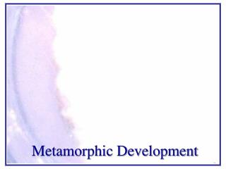 Metamorphic Development