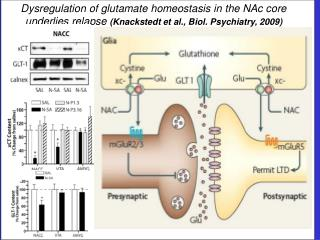Dysregulation of glutamate homeostasis in the NAc core