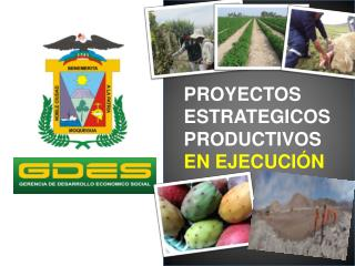 PROYECTOS ESTRATEGICOS PRODUCTIVOS EN EJECUCIÓN
