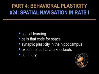 spatial learning  cells that code for space  synaptic plasticity in the hippocampus