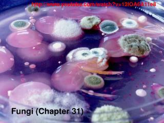 Fungi (Chapter 31)