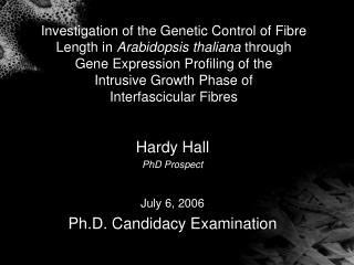 Hardy Hall PhD Prospect July 6, 2006 Ph.D. Candidacy Examination