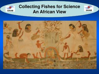 Collecting Fishes for Science An African View
