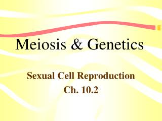 Meiosis  Genetics