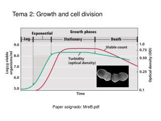 Tema 2:  Growth and cell division