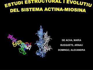 ESTUDI ESTRUCTURAL I EVOLUTIU  DEL SISTEMA ACTINA-MIOSINA