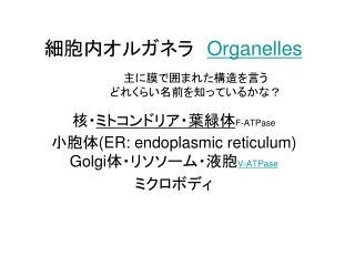 細胞内オルガネラ  Organelles
