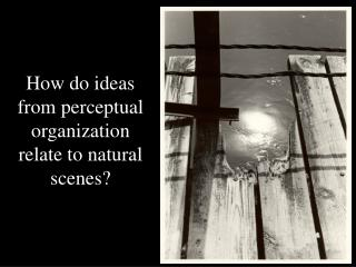 How do ideas from perceptual organization relate to natural scenes?