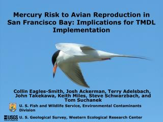 Mercury Risk to Avian Reproduction in San Francisco Bay: Implications for TMDL Implementation