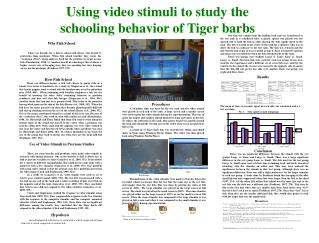 Using video stimuli to study the schooling behavior of Tiger barbs